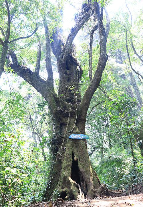 parque central arbol magdalena milpas altas